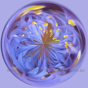 Cornflower-card-blog