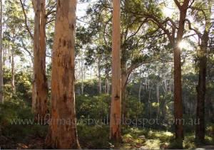 Kari-Forest-card-blog