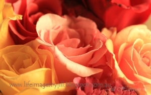 Roses-card3-blog